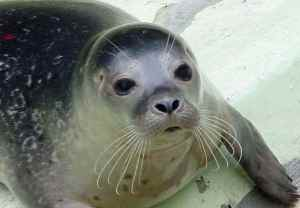 Click here to see why Mediterranean Monk Seal is mascot of the Championship